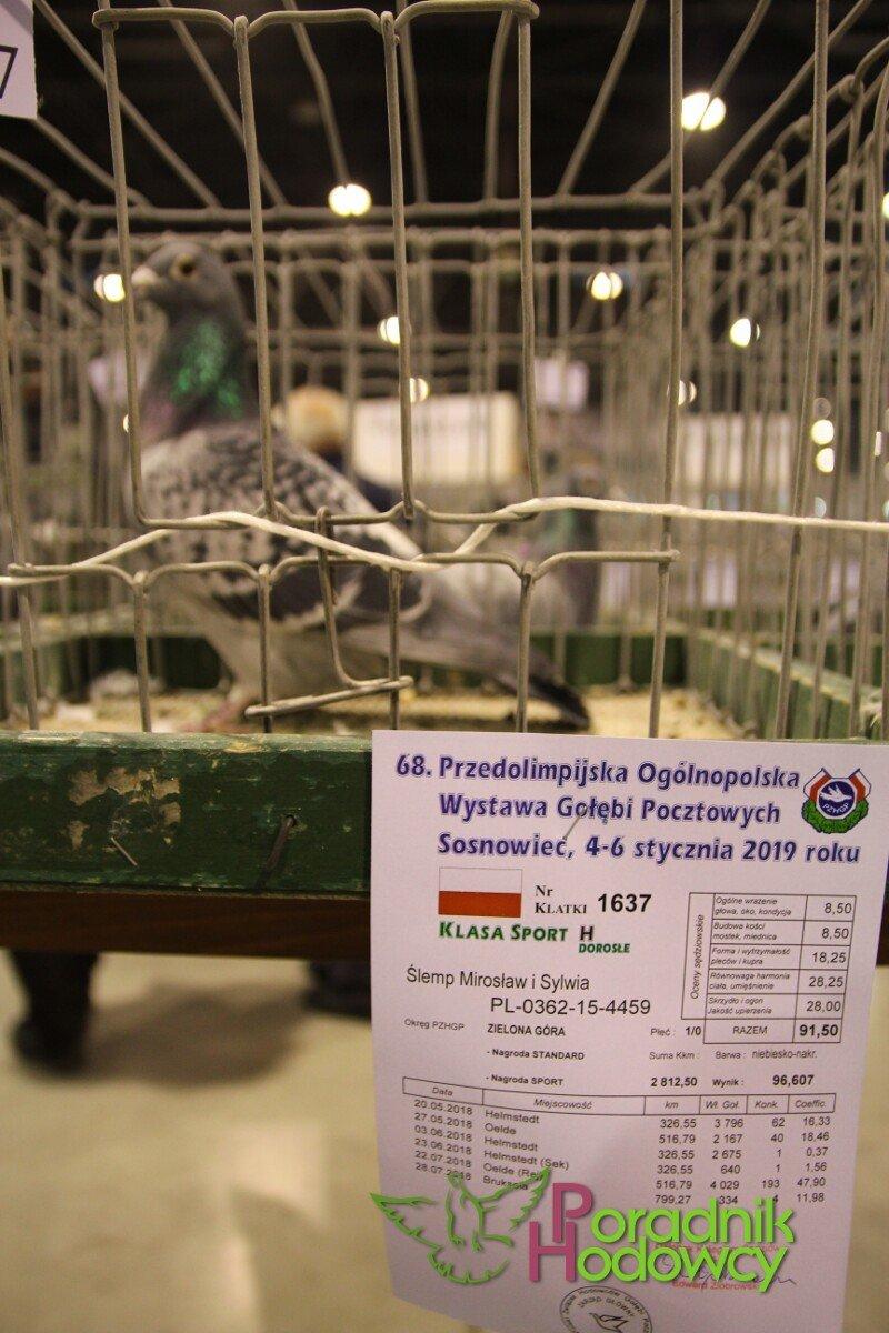 68. Ogólnopolska Wystawa Gołębi Pocztowych Sosnowiec 2020